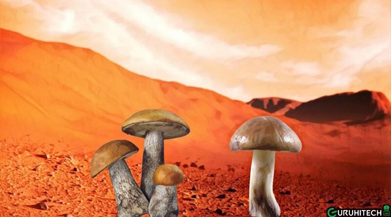 funghi su marte